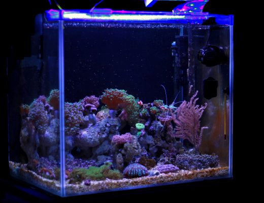oswietlenie-akwarium