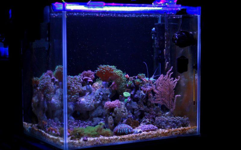 Jakie Oświetlenie Do Akwarium Meublescompl