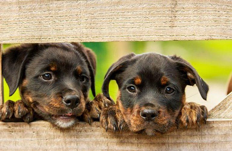 piekny-ogrod-i-pies-czy-to-mozliwe